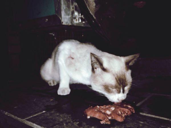 Cats Cute Pets 認養代替購買 Beautiful