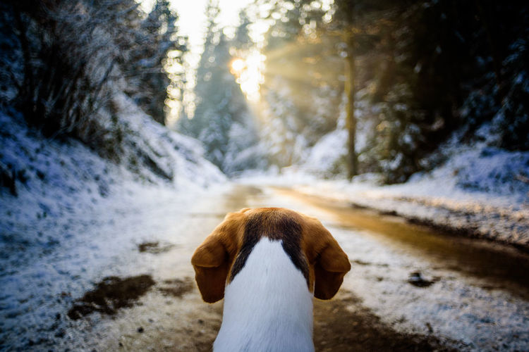 Rear view of dog on snow covered land