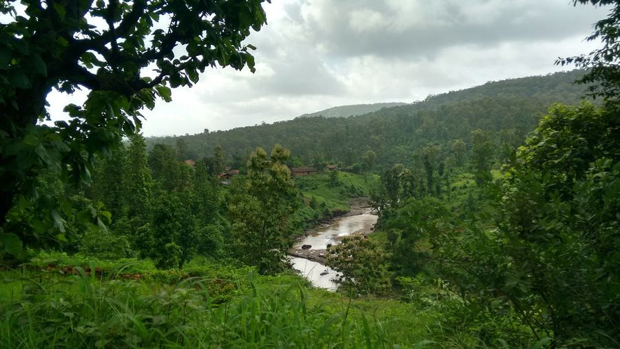 Soothing Monsoon Day Exploring Forest Green Green Color Holiday Landscape Lush Foliage Monsoon Greenary Mountain Nature No People Outdoors Remote Scenics Stream Tranquil Scene Tranquility Tree Trip