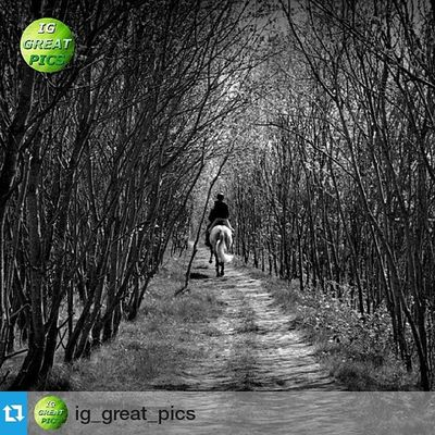 "Thankyou so much @ig_great_pics for choosing my photo to appear on your wonderful page, i really appreciate it being a feature of yours 😊 kind regards my friend 👍 ・・・ May 02, 2015 • 💥ⓟⓡⓞⓤⓓⓛⓨ ⓟⓡⓔⓢⓔⓝⓣⓢ💥 ================================= FEATURED: Blackandwhite PLACE: Near Allerton Bywater - UK PHOTO BY:  @amatuer_mobile_photography  Congratulations !! 🌟👏🌟 Thanks for sharing with us this great pic!! Please IG friends show your support by visiting their wonderful gallery !! 👍 ================================= 📌 No matter the quantity but the quality ➡ Follow @ig_great_pics®  Tag your photos with Ig_great_pics ⛔ Photos must be your own ⛔ ================================= 📝 ""Photography is a tool for dealing with things that everybody knows, but nobody pays attention to"" (Emmet Gowing) ================================= Ig_great_pics® Monochromatic Noirlovers Road_lovers Super_photoeditz Bnw_fanatics Bnwstyles_gf Snap_bnw Fabshots Nature_wizards Bnwoftheday Beautiful Absolute_shotz Ig_great_pics_bnw Gp_amatuer_mobile_photography Thebest_capture Shotsbyyou Top_bnw World_bnw Click_n_share Greatest_shots Landscape pathway bwbeauty ig_united_kingdom loves_united_kingdom shadows =================================  PLEASE !! Don't follow to unfollow  ================================== • • 👇"