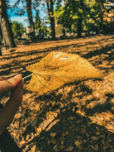 #autumnlove #autummcolors #autumn #photography Human Hand Hand One Person Human Body Part Real People Nature Sunlight First Eyeem Photo