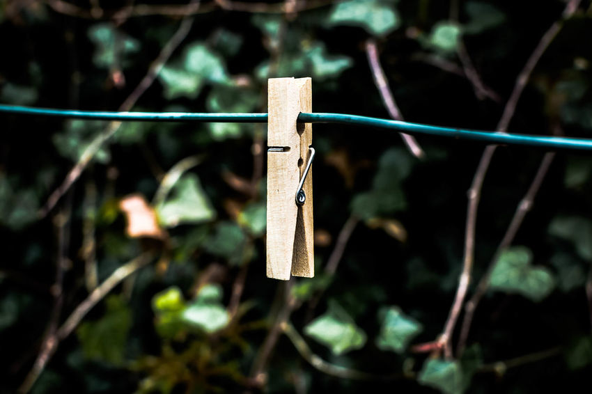 hanging out, its sunday! Blurred Background Blurry Background Clothespin Daylight EyeEm Best Shots Focus On Foreground Garden Hanging Hanging Out Light And Shadow LINE Nikonphotographer Nikonphotography One Object Open Edit Outdoor Outdoors Schnur Sonntag Sunday Moods Tool Wood - Material Wooden Wäscheklammer Wäscheleine
