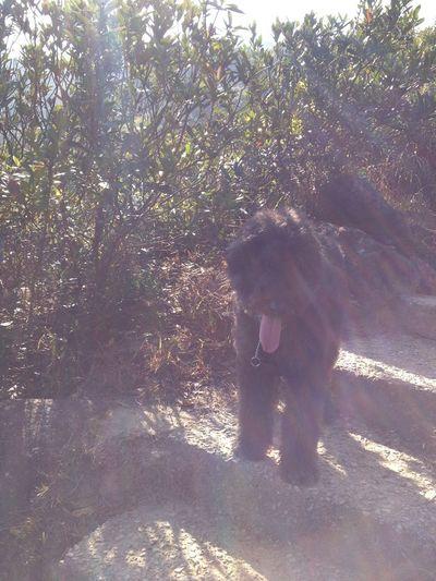 Back light with black dog