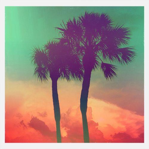 Saint Pete! Saint Petersburg Palm Trees Mextures Florida