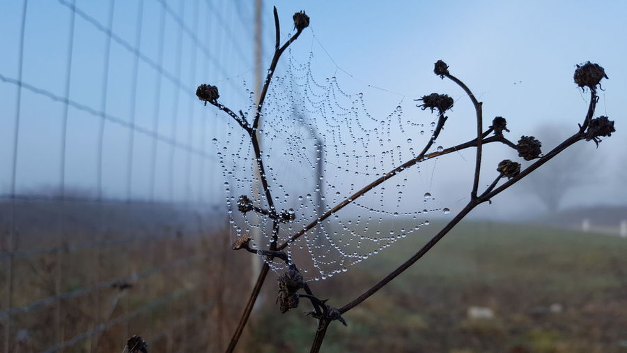 Close-up of spider web on plant against sky