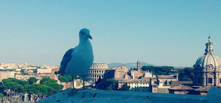 Casa mia! Rome Home Colosseo Walking Around Architecture Gabbiano :)