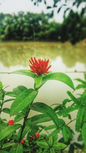 New Years Resolutions 2016 Nature Photography Natural Beauty Mobograph Check This Out Flower Mobography