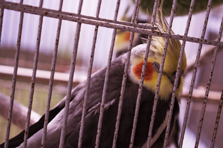 Animal Themes Animal Wildlife Animals In Captivity Animals In The Wild Bird Birdcage Cage Close-up Day Domestic Animals Focus On Foreground Mammal Metal Nature No People One Animal Outdoors Perching Pets Trapped