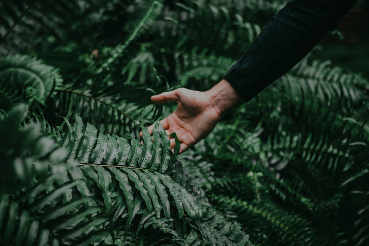 One Person Hand Human Hand Plant Green Color Human Body Part Growth Real People Day Nature Leaf Plant Part Tree Holding Focus On Foreground Working Touching Unrecognizable Person Outdoors Finger Selective Focus Leaves Connection