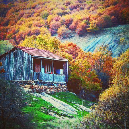 Lonely Wooden Shack Yalnız Kulübe Eskişehir Degirmendere First Eyeem Photo