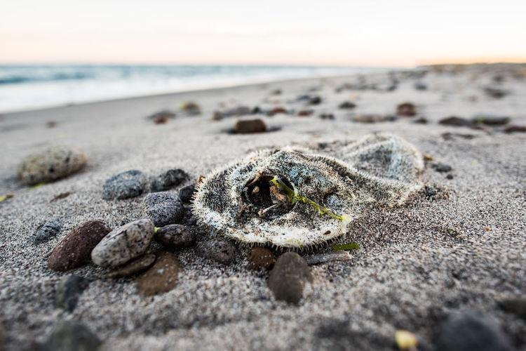 Dead Fish At Sandy Beach