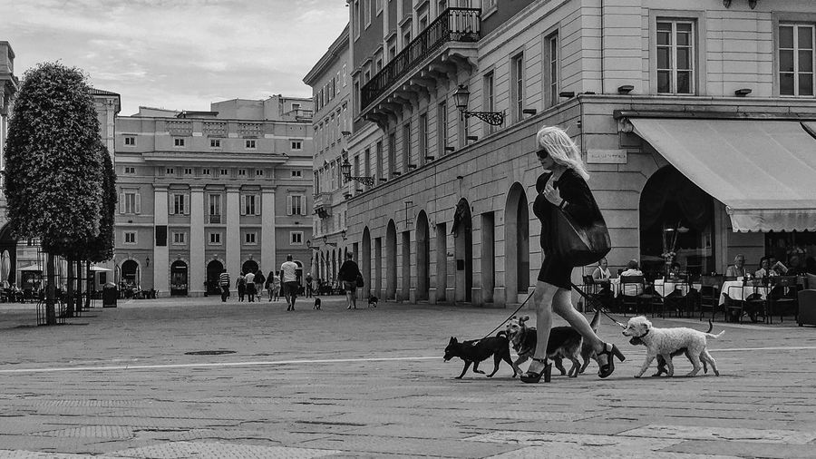 The dog's queen Blackandwhite B&w Street Photography Streetphotography Black And White Vscocam EyeEm Best Shots IPhoneography Iphoneonly Mobilephotography Trieste The Street Photographer - 2017 EyeEm Awards
