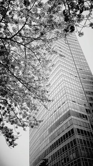 Every year, there are cherry blossom fedtivals in yeoido park Bildings Take Photos Blackandwhite Photography In Yeoido
