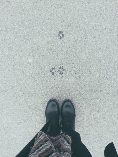 STEP BY STEP 🐾 Cute Wet Day Weather Stepbystep Whatchout Mypointofview Dog Sweet Cuteness Loveit Feetselfie Ontheroad