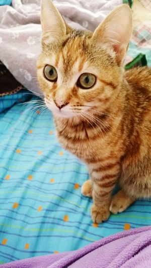 Cat Venere Crazy Cat Home Sweet Home Love ♥ Details Me Kittycat
