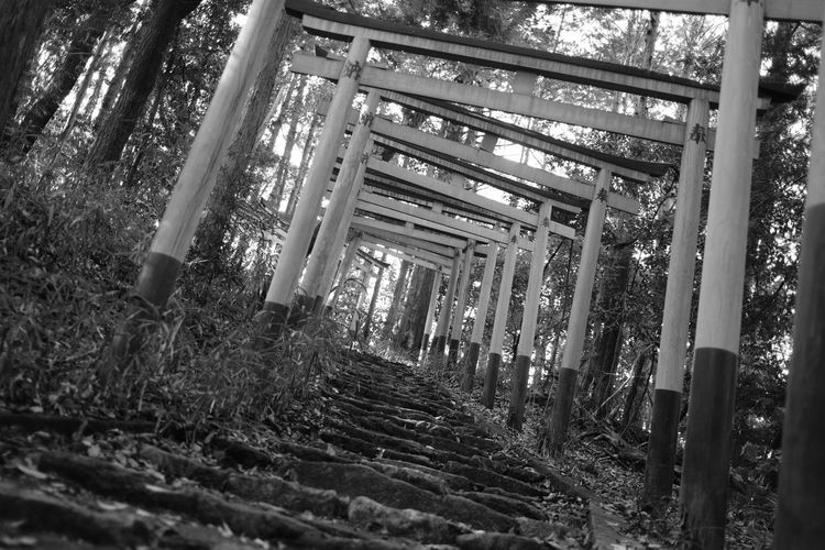 View of bamboo trees in the forest