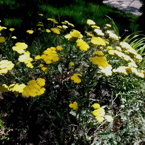 Flowers Yellow Explore Nature Volunteering