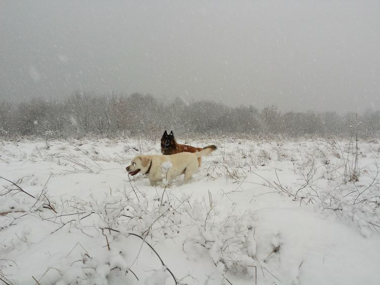 Snow Storm Walking Dogs Snow Cold Temperature Winter Dog Sky