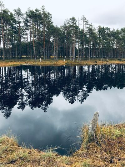Made With IPhone 7 No Effects Water Reflection Plant Tree Lake Sky Tranquility No People Nature Beauty In Nature Day Scenics - Nature Tranquil Scene Growth Standing Water Cloud - Sky Outdoors Agriculture Idyllic