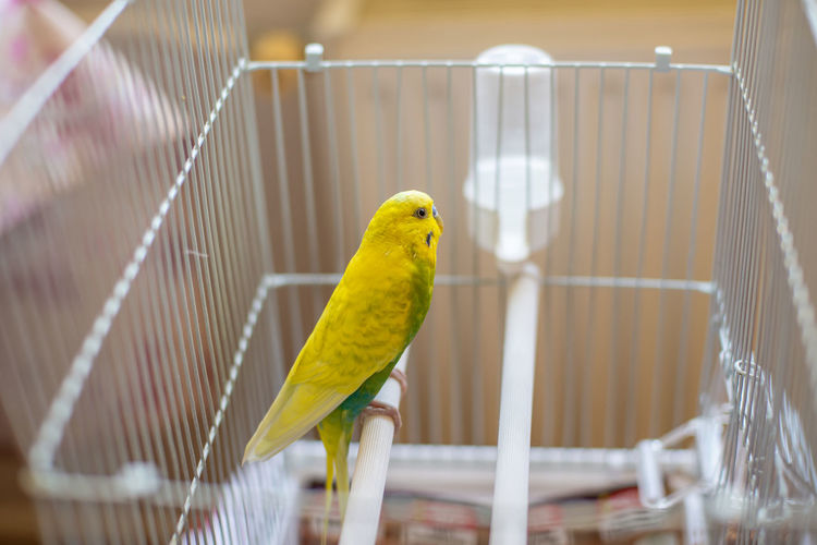 Bird perching in cage