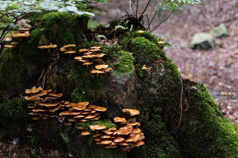 Close-up of mushrooms growing on log