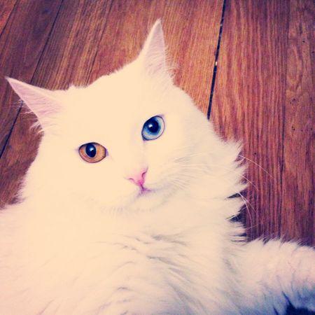Cat Animals Cute Hi!
