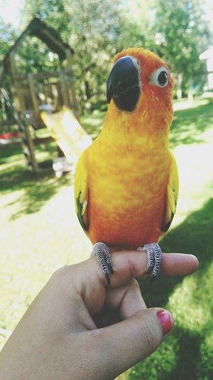Rio PrettyBird