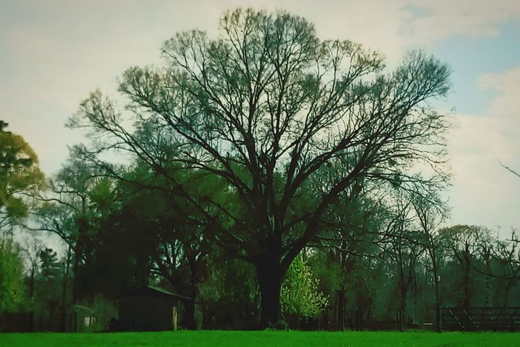 ominous tree Ominous Tree Tranquility Leaves Green Simplicity In Nature Forest Ease Tree Cloud - Sky Outdoors Sky No People Day Grass Nature