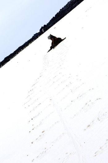 #galapagos #iguana Snowboarding Snow Ski Holiday Winter Bird Cold Temperature Extreme Sports Snowing Winter Sport