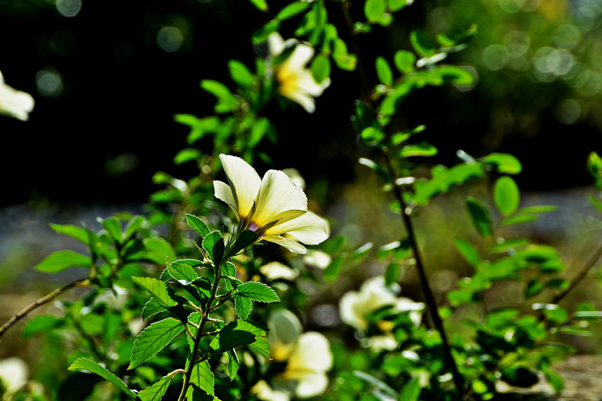 Beauty In Nature Blooming Flower Fragility Freshness Growth Leaf Nature_collection Outdoors
