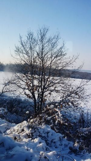 On The Road Train Ride February 2016 Snowy Trees Nature On Your Doorstep