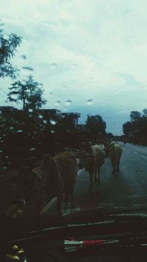 In A Rainy Day ,Picture Taken Inside From A Car