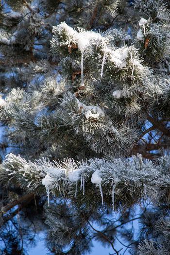 Full frame shot of frozen plants during winter