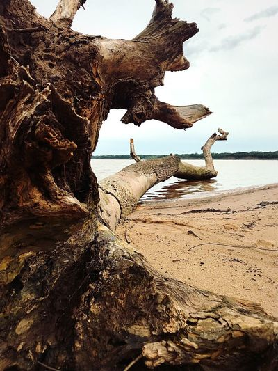 Trees fallen outside the underwater town of Deep Fork Statue Tree Water Beach Sea Land Sky Nature Day Outdoors Beauty In Nature