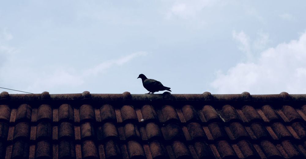 Animal Animal Themes Bird Black Color Cloud - Sky No People Outdoors Sky