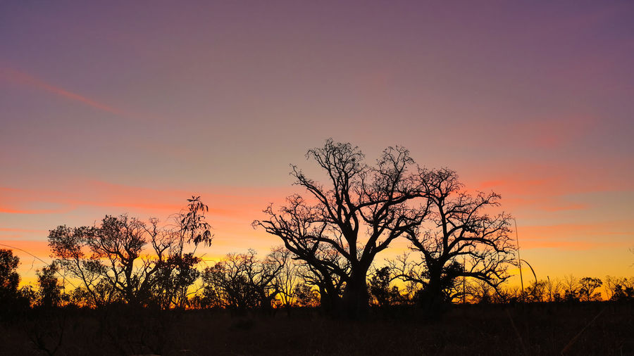 Sunrise near Wyndham West Australia Adansonia Gregorii Bare Tree Beauty In Nature Boab Tree Landscape Lone Majestic Multi Colored Nature No People Orange Color Outdoors Rural Scene Scenics Silhouette Sky Sunrise Tranquil Scene Tranquility Travel Destinations Tree Yellow