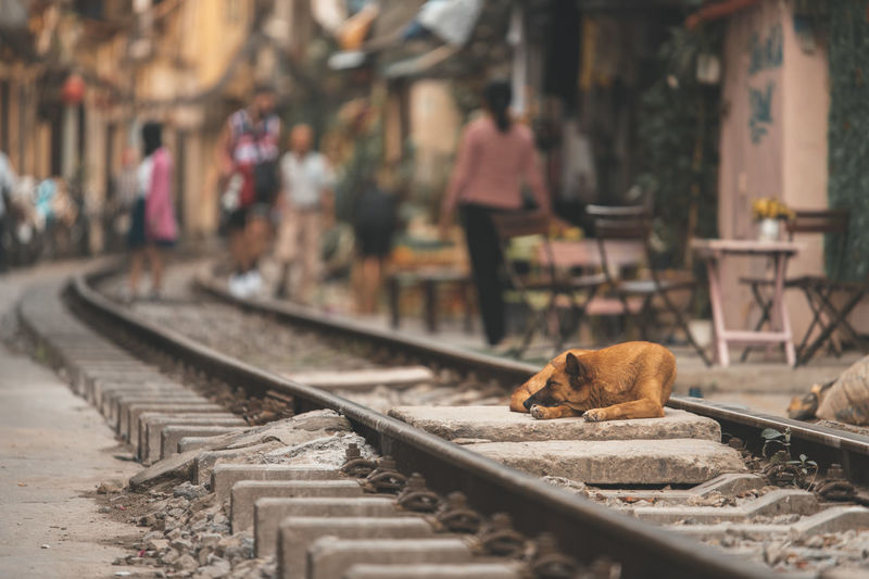 Cat sitting on railroad track