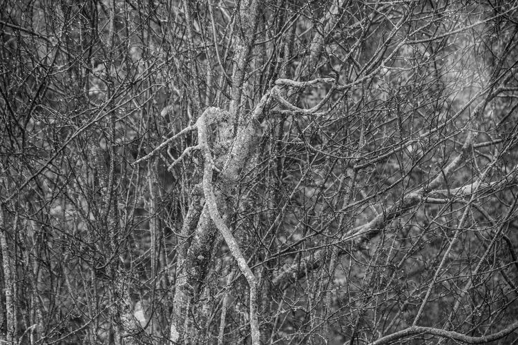 Winter is coming Tree Plant Forest No People Nature Land Branch Bare Tree Day Tranquility Trunk Tree Trunk Growth Outdoors Full Frame WoodLand Focus On Foreground Beauty In Nature Winter Complexity Texture Winter Autumn Blackandwhite Black And White Autumn Mood