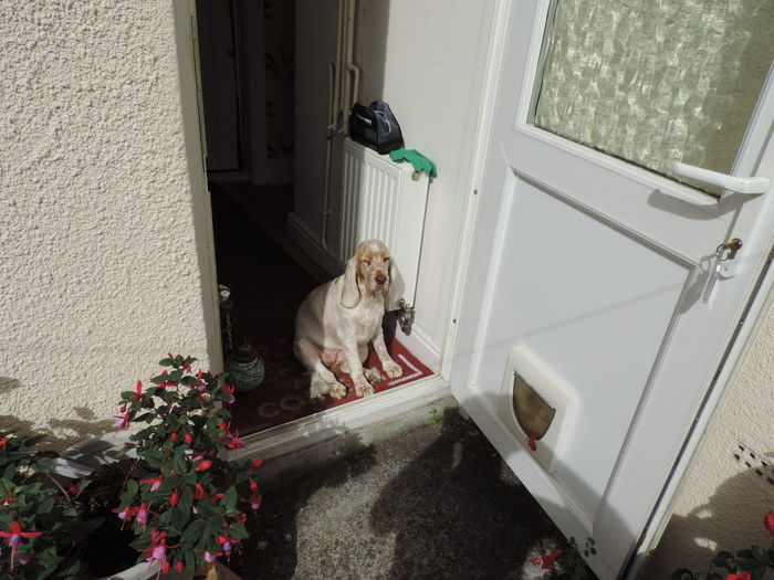 Portrait of a dog at the door entrance