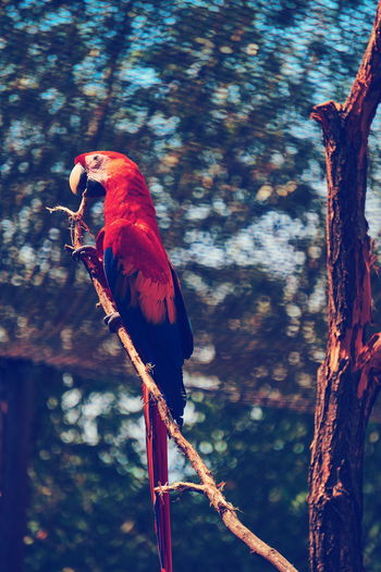 Bird Vertebrate Animal Animal Themes Animal Wildlife One Animal Perching Tree Animals In The Wild Focus On Foreground No People Nature Macaw Branch Plant Parrot Day Scarlet Macaw Outdoors Red