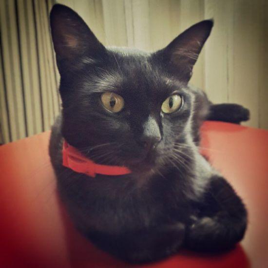 Tasmasiyla uyumlu olduğundan o sehpa da yatiyormus ;))Cat Kedi Kedi Caturday BLackCat Black Catpic Instacat Siyah Karakedi