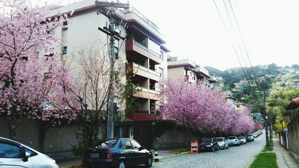 Flower No People Building Exterior Sky Nature Cherry Tree Springtime Backgrounds Built Structure Architecture Outdoors Pink Pink Color Cherry Blossom Beauty In Nature Cherry Blossom Viewing Cherryblossomfestival Cherries Cherry Tree Flower Blooming Cherry Blossom Tree Illuminated Taking Photos