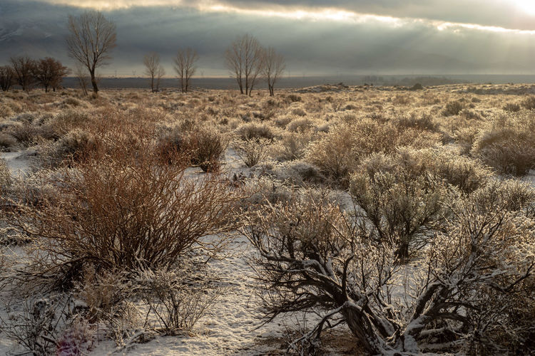 early morning snow in desert valley Eastern Sierra Nevadas California Plant Land Nature No People Day Sky Field Outdoors Tranquility Snow ❄ Desert Landscape Desert Snow California Sierra Nevada Desert Valley Morning Light Desert Plants Winter Desert Winter Landscape