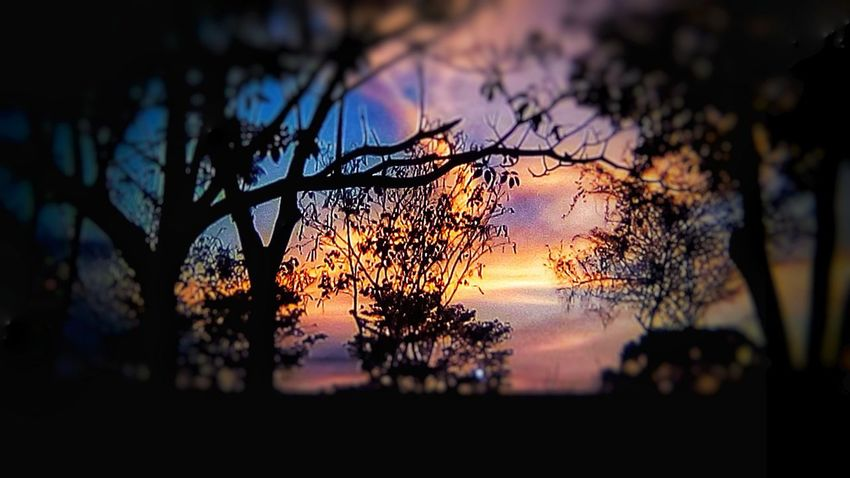 colored summer sunsets Sunrise_sunsets_aroundworld San Jose, Costa Rica Costa Rica 🇨🇷 Costa Rica❤ Eyemphotography EyeEm Best Shots Tree Sunset Multi Colored Silhouette Sky Close-up