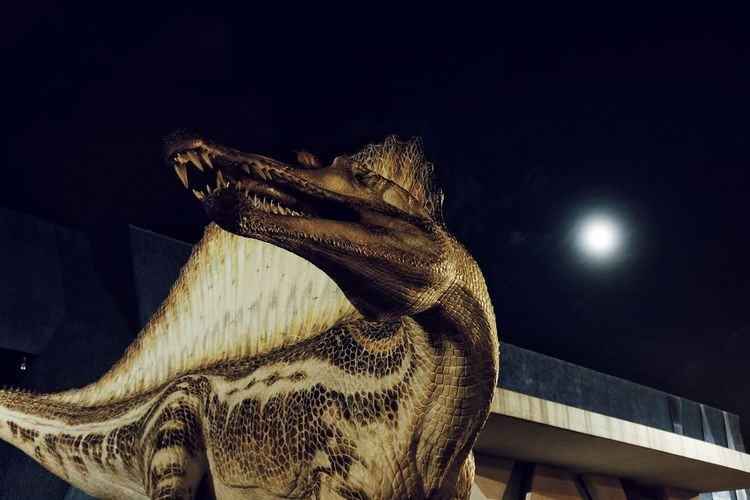 No People Animal Themes Streetphotography Streetphotographers EyeEm Best Shots EyeEm Best Edits Illuminated Black Background City Life Moonshot Supermoon 2016 DinosaursAroundTheWorld Dinosaur World