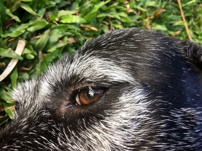 Close up of a dog face, relaxing on the lawn. One Animal Pets Domestic Animals Animal Themes Dog Mammal Animal Hair Outdoors No People Day Close-up Portrait Nature Dog Eye Relax Sommergefühle