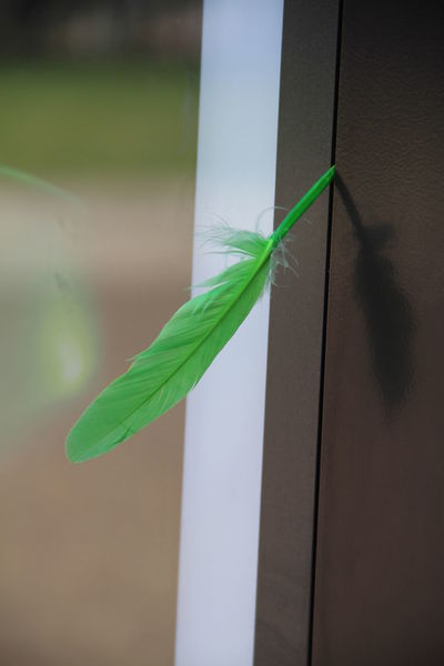 Close-up Colored Feathers Day Feather  Green Color Green Feather Indoors  No People Secret Sign Signal