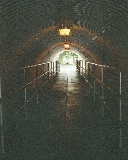 Memories Lakemary 05.2014 Film Lakemaryfl Orlando Filmphotography Filmphoto Tunnel OlympusTrip35 35mm Agfavista400 AgfaVista