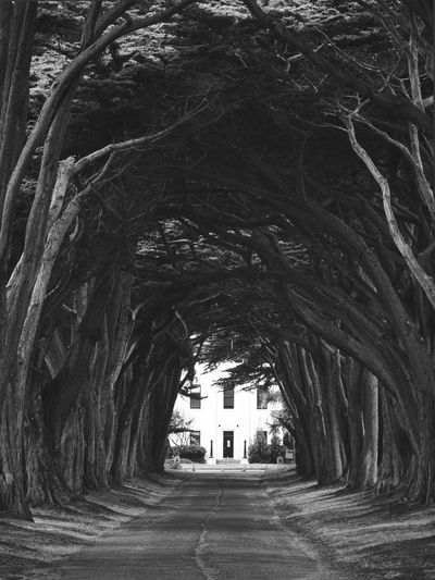 Black & White Point Reyes National Seashore Arch Architecture Black And White Building Building Exterior Built Structure Cypress Trees  Cypress Tunnel Direction Empty Growth Monochrome No People Road The Way Forward Tree Tree Trunk Treelined