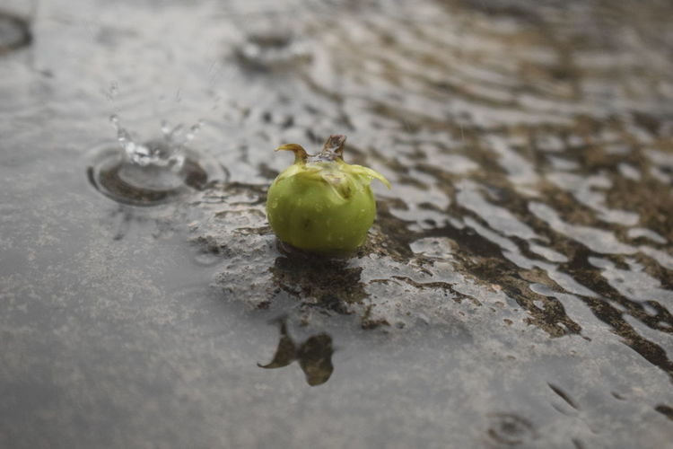 Fruit Food And Drink Apple - Fruit Food No People Healthy Eating Close-up Water Freshness Day Nature Outdoors